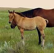 Chipper x Dorothy filly
